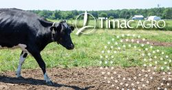 Effluents+cow