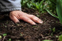 Analyse de sols