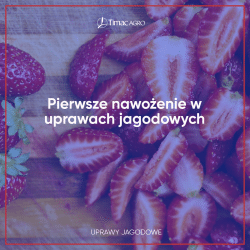 Pierwsze nawożenie w uprawach jagodowych