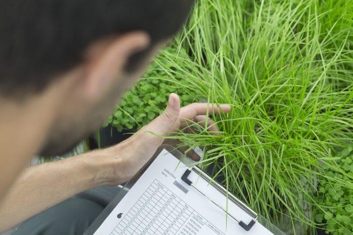 Analiza rozwoju nawożonej rośliny