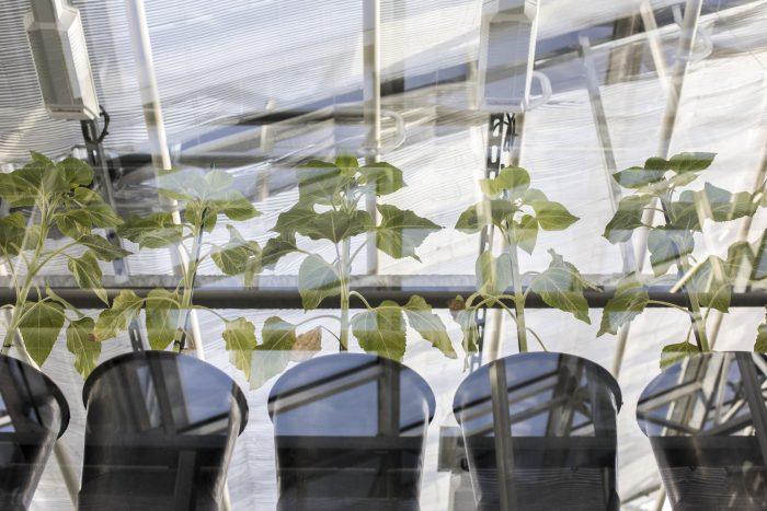 Nawożone sadzonki roślin