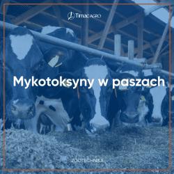 Mykotoksyny w paszy dla bydła