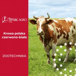 Krowa polska czerwono biała