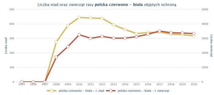 krowa polska czerwono biała - liczebność rasy