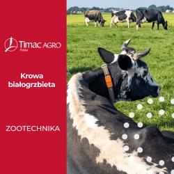 Bydło białogrzbiete - krowa białogrzbieta