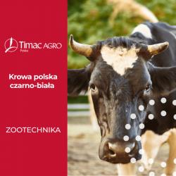 Krowa polska czarno-biała - rasa polska czarno-biała