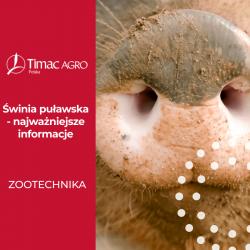 Świnia puławska - rasa puławska świń