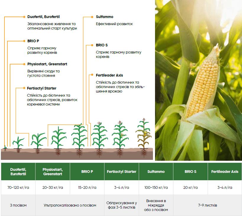 живлення кукурудзи