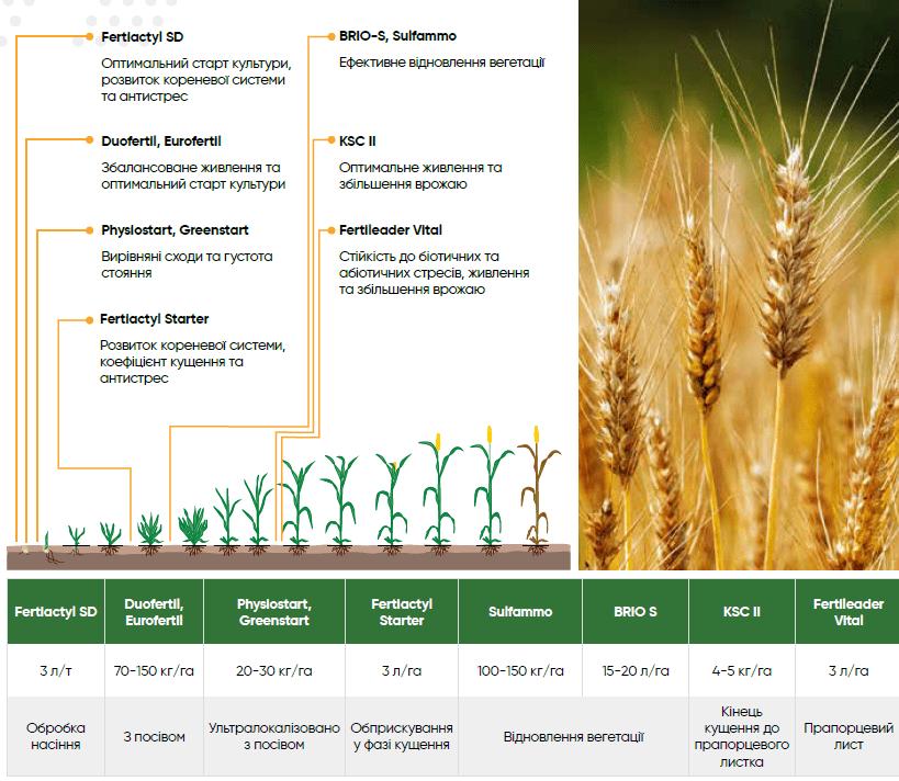 живлення пшениці