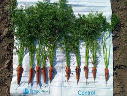 добрива для моркви