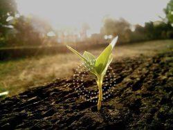 cultivando-innovacion-timac-agro