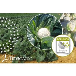 Brassicaceae soluzioni nutrizionali performance