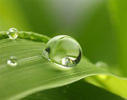 Biostimulants racinaires et foliaires